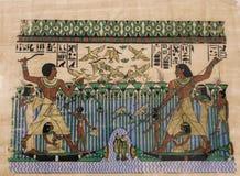 papyrus Foto de Stock Royalty Free