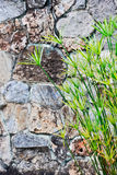 Papyrus et mur de roche Photo libre de droits