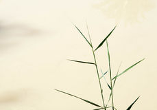 Papyrus plant (Cyperus papyrus). At the muddy waters of River of Jordan stock photography