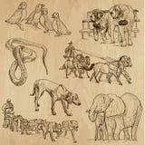 Paquet 11 d'animaux Images libres de droits
