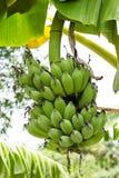 Paquet de banane Image stock