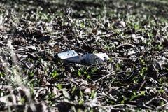 Paquet de cigarettes sur l'herbe Photographie stock libre de droits
