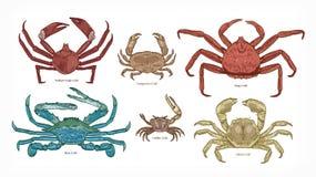 Paquet de dessins colorés de différents types de crabes Collection de beaux animaux marins ou crustacés d'océan illustration stock