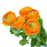 Paquet de fleurs oranges de ranunculus Photos stock