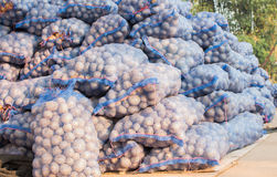 Paquet de pommes de terre Image libre de droits