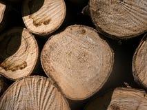 Paquet de rondins en bois Images stock