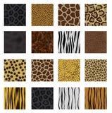 Paquet fortement détaillé de peau animale Photographie stock
