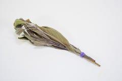 Paquet sage sec par herbes Images stock