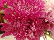 Paquet vibrant de fleurs roses image libre de droits