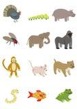 Paquete 4 de los animales Imagen de archivo libre de regalías