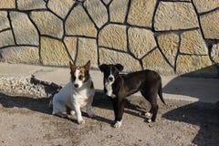 Paquete de perros perdidos Fotografía de archivo libre de regalías