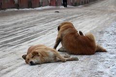 Paquete de perros perdidos Fotos de archivo