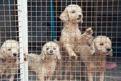 Paquete de perros perdidos Imagen de archivo libre de regalías