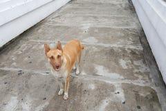 Paquete de perros perdidos Imagen de archivo