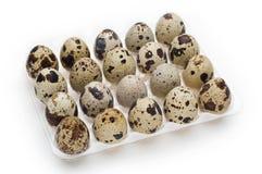 Paquete del huevo de codornices Imagenes de archivo
