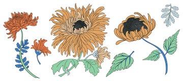 Paquete del vector de los elementos del crisantemo Imágenes de archivo libres de regalías