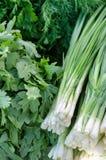 Paquetes de cebollas verdes de la primavera Foto de archivo