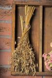 Paquetes de plantas secadas Imagen de archivo libre de regalías