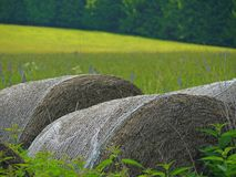 Paquetes esféricos de la paja puestos en campo de hierba Fotos de archivo libres de regalías