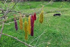 Paquets de séchage teint de laine sur un arbre au Pérou Photos stock