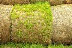 Paquets putréfiés endommagés de paille de blé, sur le champ vert Images stock