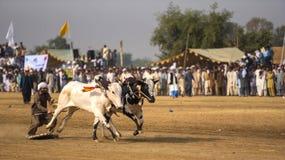 Paquistán rural, la emoción y el toro de la pompa compiten con Imagenes de archivo