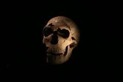 París, Francia 02 25 2016 Cráneo original de un hombre de las cavernas exhibido por primera vez en el nuevo museo de París del ho Imágenes de archivo libres de regalías