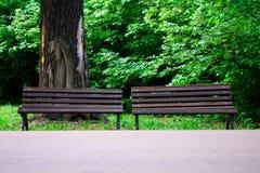Par av brunt parkerar bänkar mot den stora trädstammen med fördjupningen royaltyfri fotografi