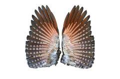 Par av fladdrandefågeln under vingar Royaltyfria Foton