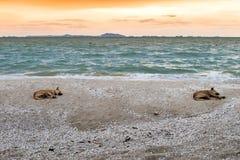 Par av hundkapplöpning som vilar på en strand Arkivbild