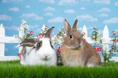 Par av kaniner i trädgården royaltyfria bilder