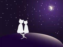 Par av katter som håller ögonen på stjärnor stock illustrationer