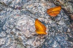 Par av orange fjärilar Arkivfoto