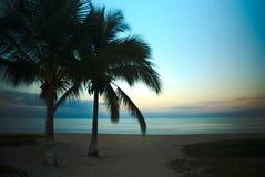 Par av palmträd på solnedgången i Mexico Arkivfoton
