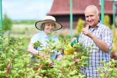 Par av pensionärer i trädgård royaltyfri foto