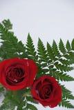 Par av röda rosor Royaltyfria Foton