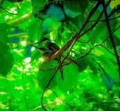 par av rufous-tailed jacamar royaltyfri fotografi