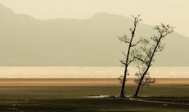 Par av träd i avskilt landskap arkivfoton