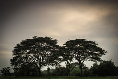Par av trädet Arkivbilder