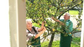 Par av trädgårdsmästare, äppleträd lager videofilmer