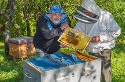 Par av ukrainska biodlare på arbetsstället Arkivfoton