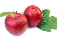Par czerwoni jabłka odizolowywający Fotografia Stock