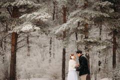 Par i en pinjeskog Arkivfoton