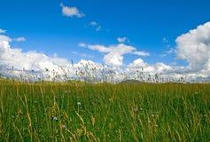Par l'herbe Image stock