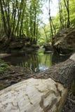 Par la forêt Photos stock