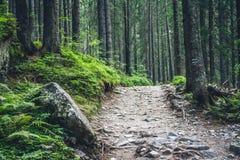 Par la forêt Image libre de droits