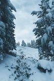 Par la forêt de neige Photos stock