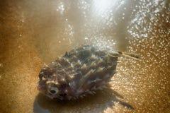 Par la mer sur la plage des poissons tropicaux des formes et des espèces étonnantes Photos libres de droits