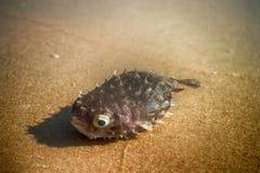 Par la mer sur la plage des poissons tropicaux des formes et des espèces étonnantes Images stock