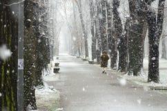Par la neige Image stock